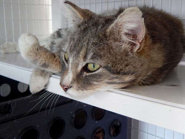 Victoria Lise photographs rescue feline