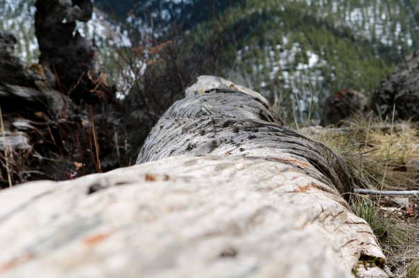 Victoria Lise Photo Post Texture of a Fallen Pine