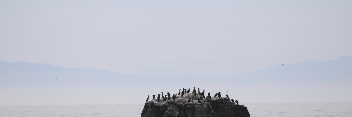 Victoria Lise Photographs Santa Cruz Fog