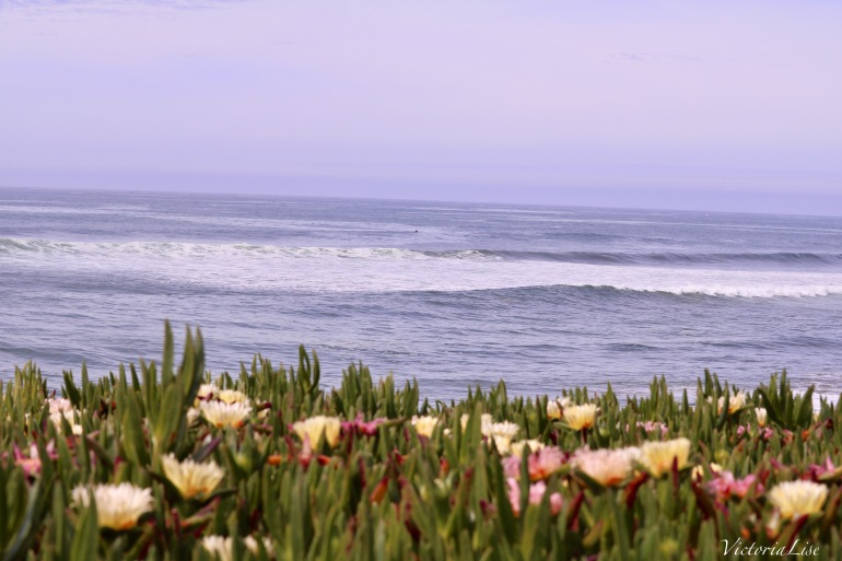 Victoria Lise Captures Pink and Yellow Succulents Against the Santa Cruz Coast