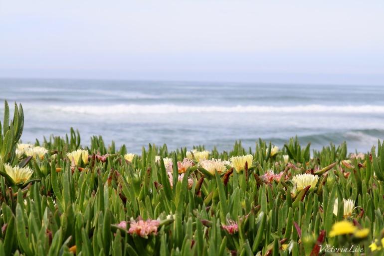 Victoria Lise Shoots Succulents by the Sea and The Santa Cruz Coast