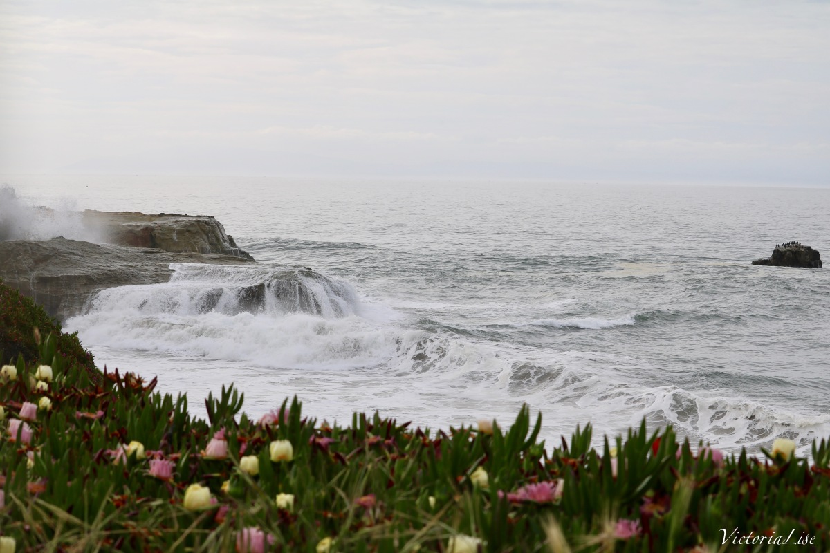 Victoria Lise Succulents By The Sea Captures Pacific Ocean Crashing Against Cliffs