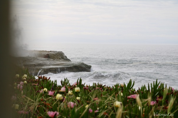 Victoria Lise Captures Spring Succulents And Ocean Mist in Santa Cruz