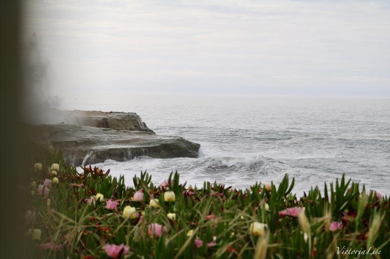 Victoria Lise Captures Spring Succulents And Ocean Mist in Santa Cruz