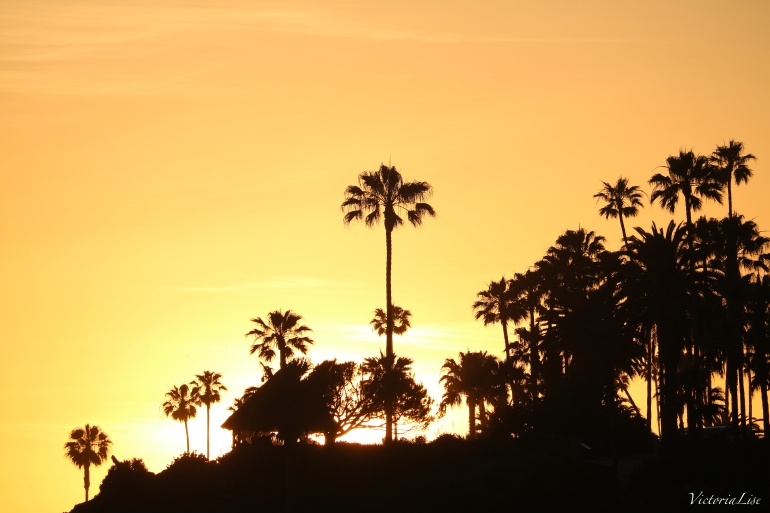 Victoria Lise Tropical Laguna Beach Sunset