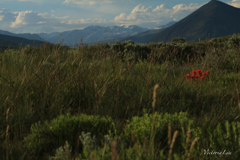 Victoria Lise Spring in the Rockies Photo Post Wildflowers with Mountain Backdrop