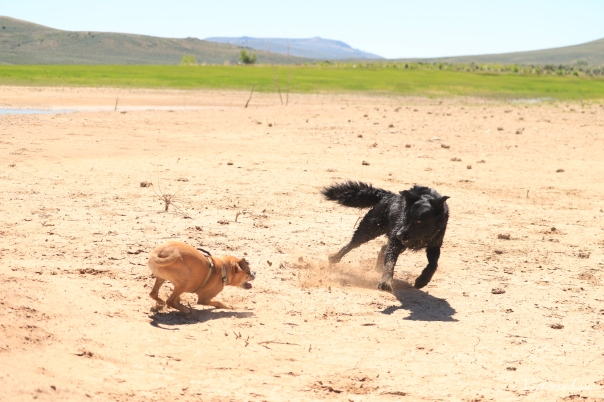 Victoria Lise Dogs at Play