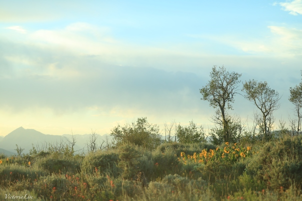 Victoria Lise Flowers in Foreground of Mountainous Landscape