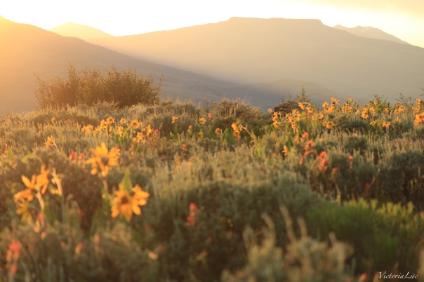 Victoria Lise Magic Hour Sunset Over Wildflowers and Red Mountain