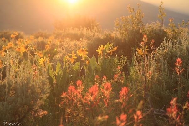 Victoria Lise Magic Hour Sunset Illuminates Diverse Wildflowers