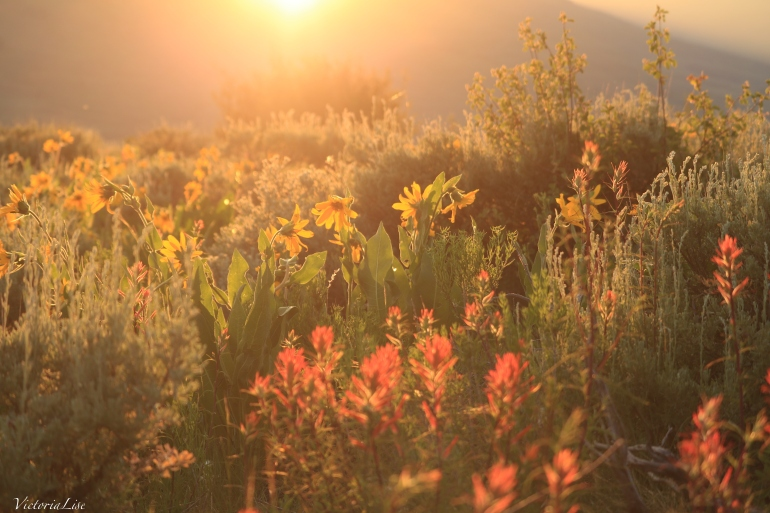 Victoria Lise Magic Hour Sunset Illuminates Diverse Wildflowers