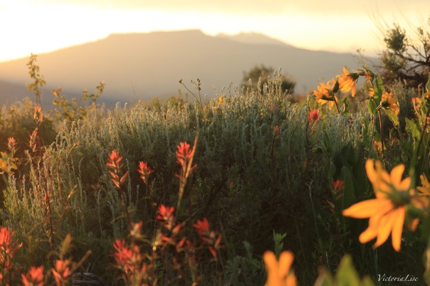 Victoria Lise Magic Hour Shades of Light Over Sage Field