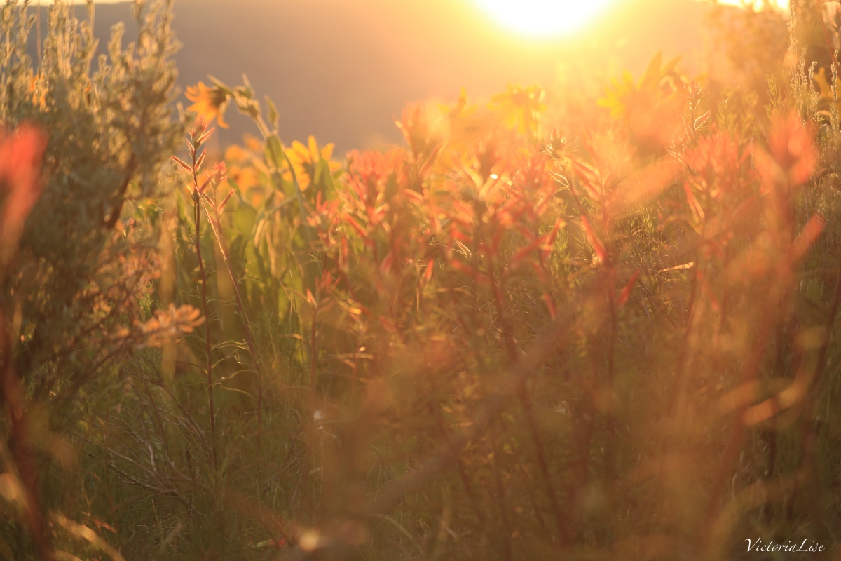 Victoria Lise Magic Hour in Gunnison County Macro Flowers and Golden Sun