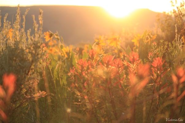Victoria Lise Magic Hour Golden Sun over Gunnison Valley Flowers