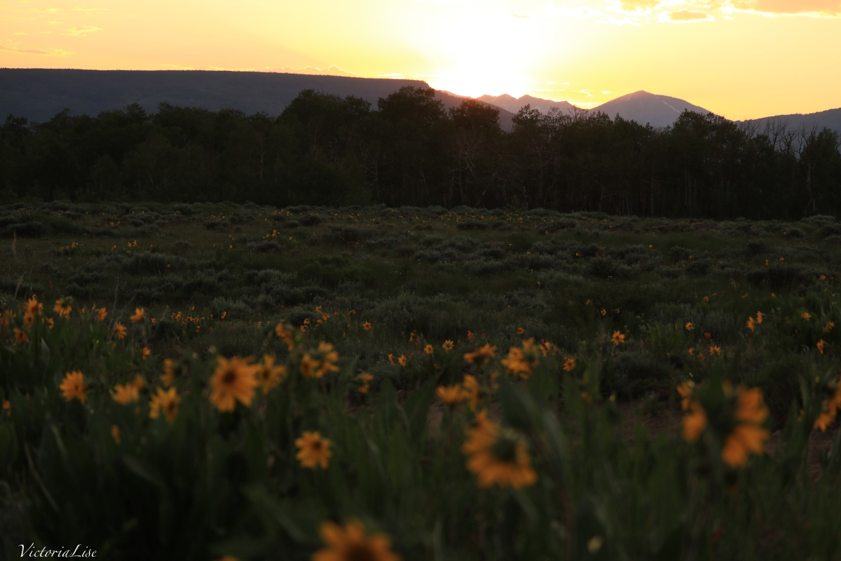 Victoria Lise Magic Hour in Gunnison County Sunset Over Anthracites and Sunflowers