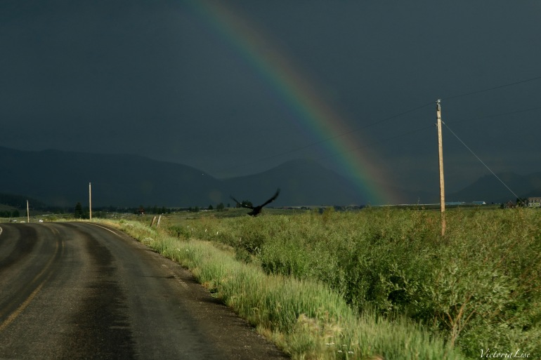 Victoria Lise Black Crow Flies Under Vibrant Rainbow