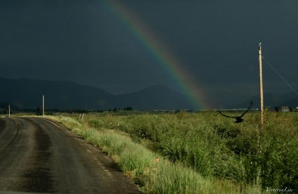 Victoria Lise Rainbow Season Bird flies Under Dark Skies