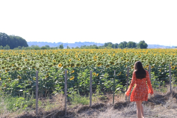 Victoria Lise in Paonia Sunflower field