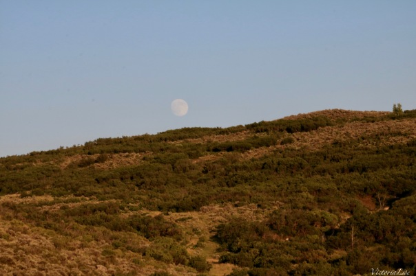 An almost full moon above golden foliage