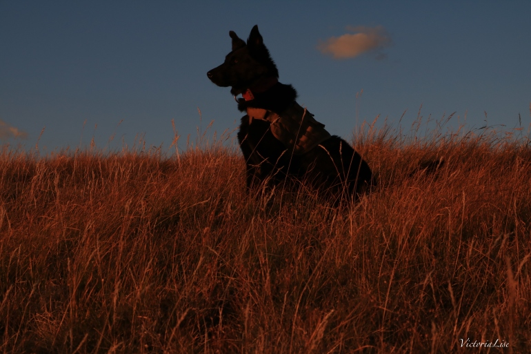Victoria Lise's dog Styx watches the August sunset