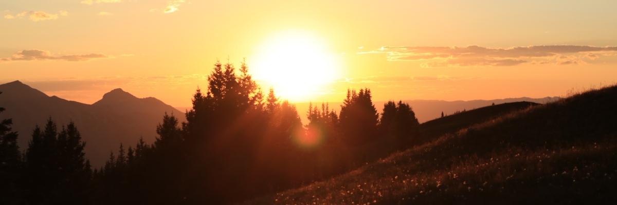 Rays of a setting sun shine through Colorado pines