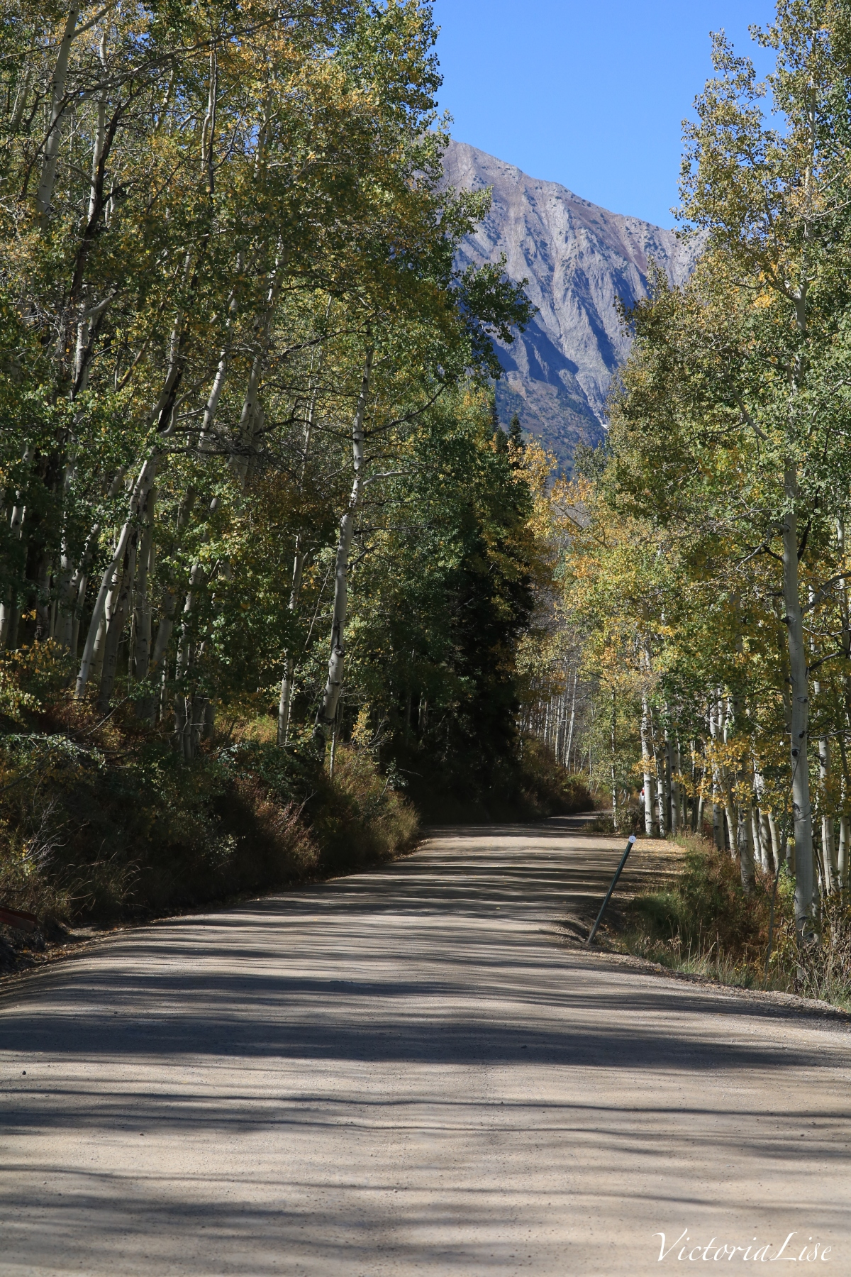 Dirt road lined with Aspens enroute to Gothic Mountain