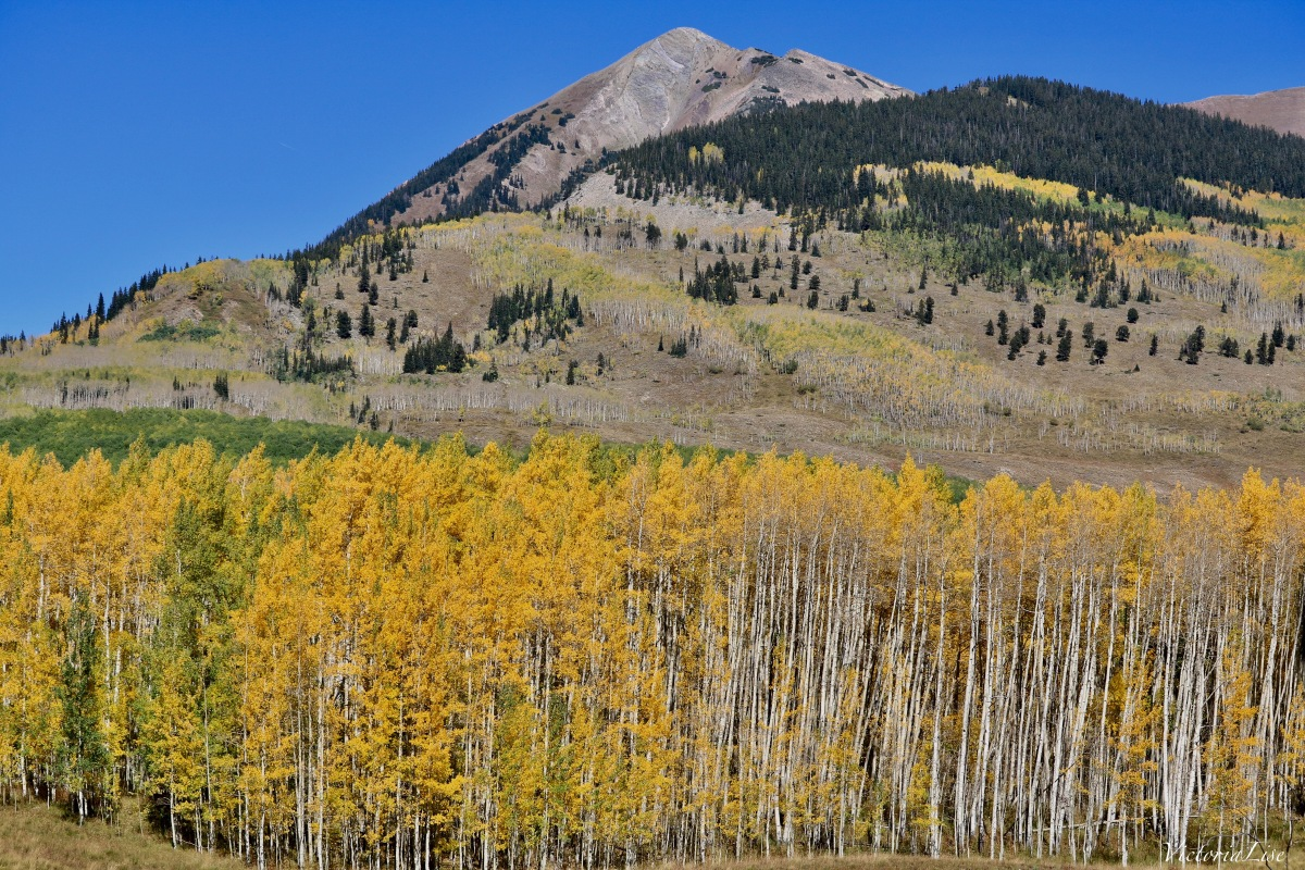 First signs of Autumn in Colorado Victoria Lise
