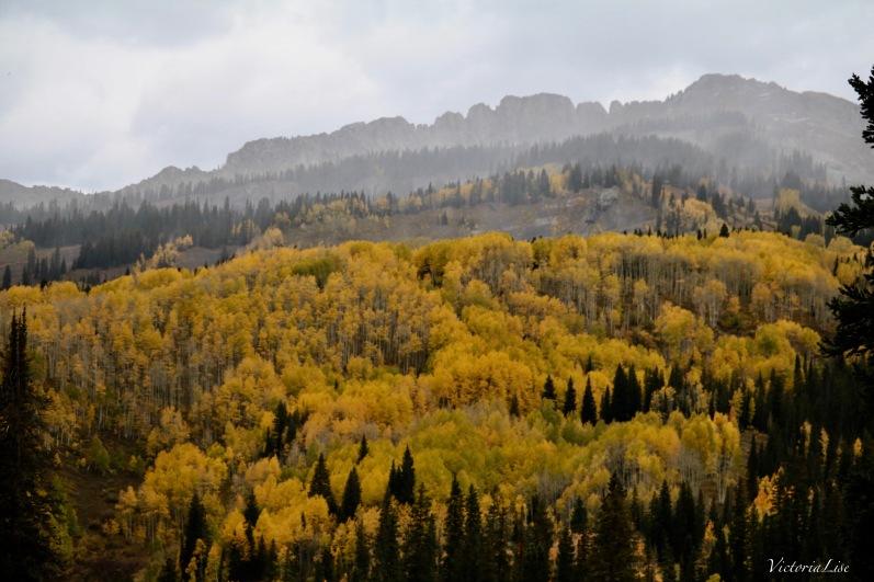 Colorful Colorado Aspen grove. Victoria Lise 2017
