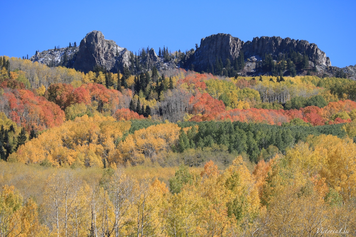 The colorful trees of Kebler Pass, Colorado. Victoria Lise