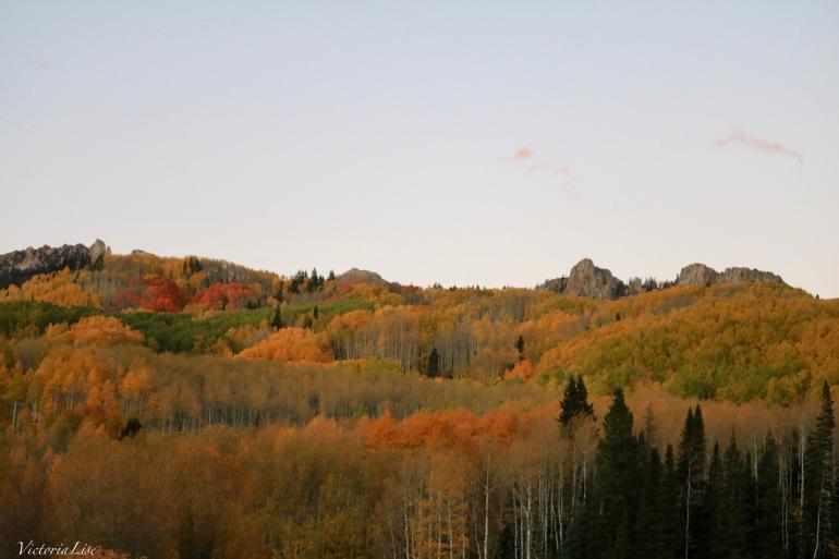 An array of falls color. Colorado 2017. Victoria Lise