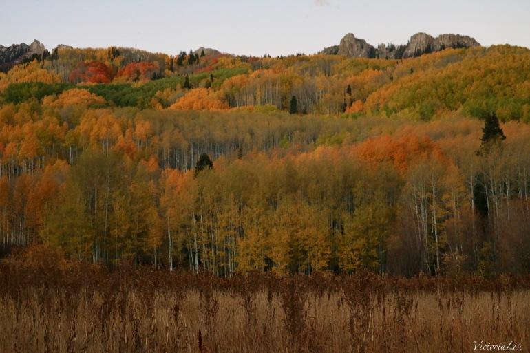 Dusk falls on autumns leaves. Victoria Lise 2017