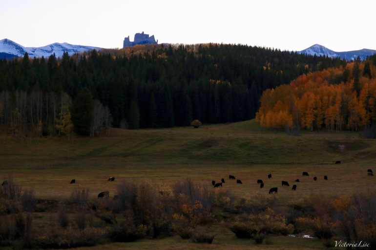 Cattle graze beneath The Castles during fall, near Gunnison, Colorado. Victoria Lise 2017