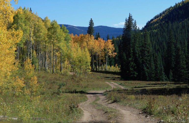 A dirt road in the Colorado mountains during fall of 2017. Victoria Lise