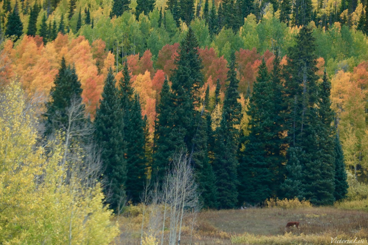 Layers of Autumn color in Colorado's high country. Victoria Lise 2017