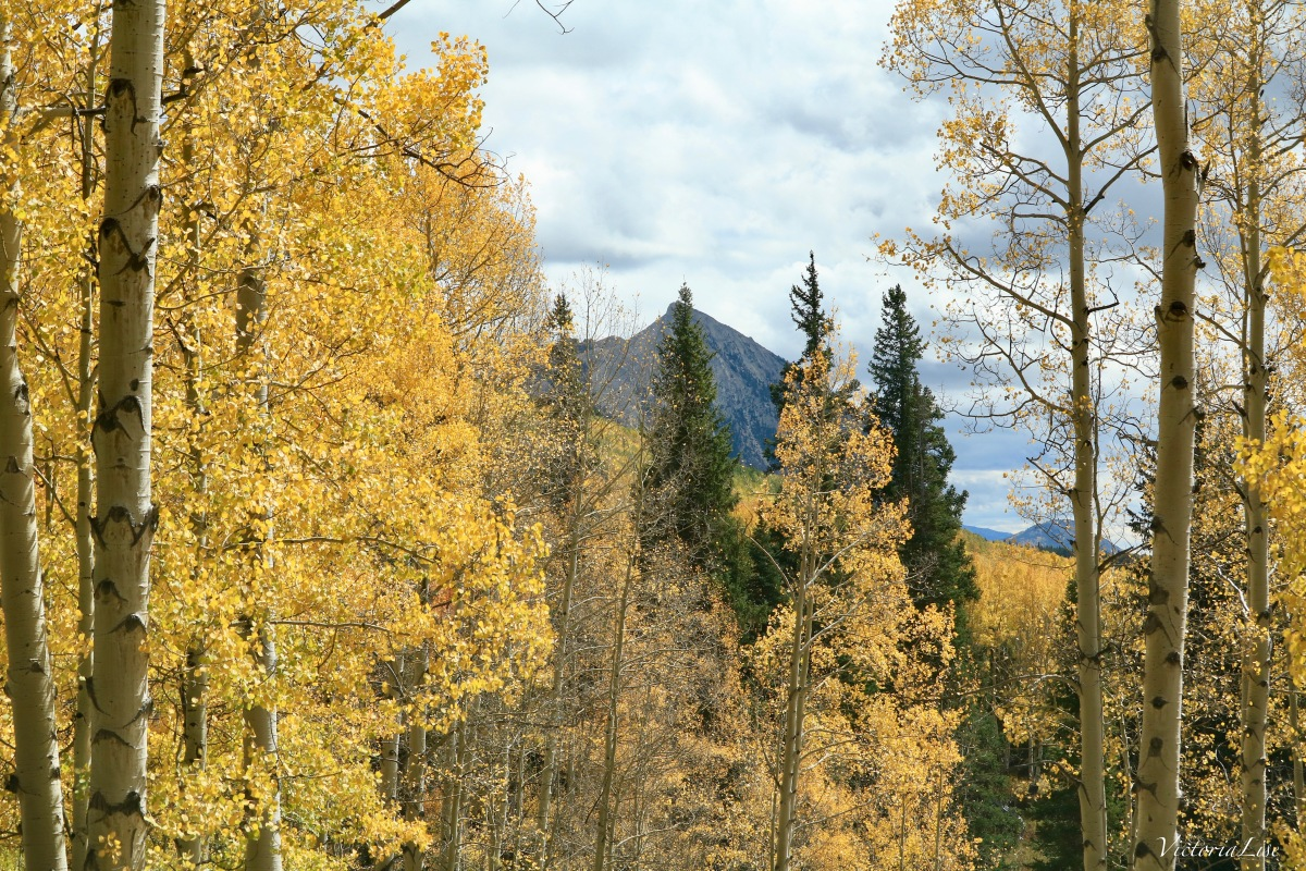 Mt. Crested Butte peeking out behind the fall foliage. Victoria Lise 2017