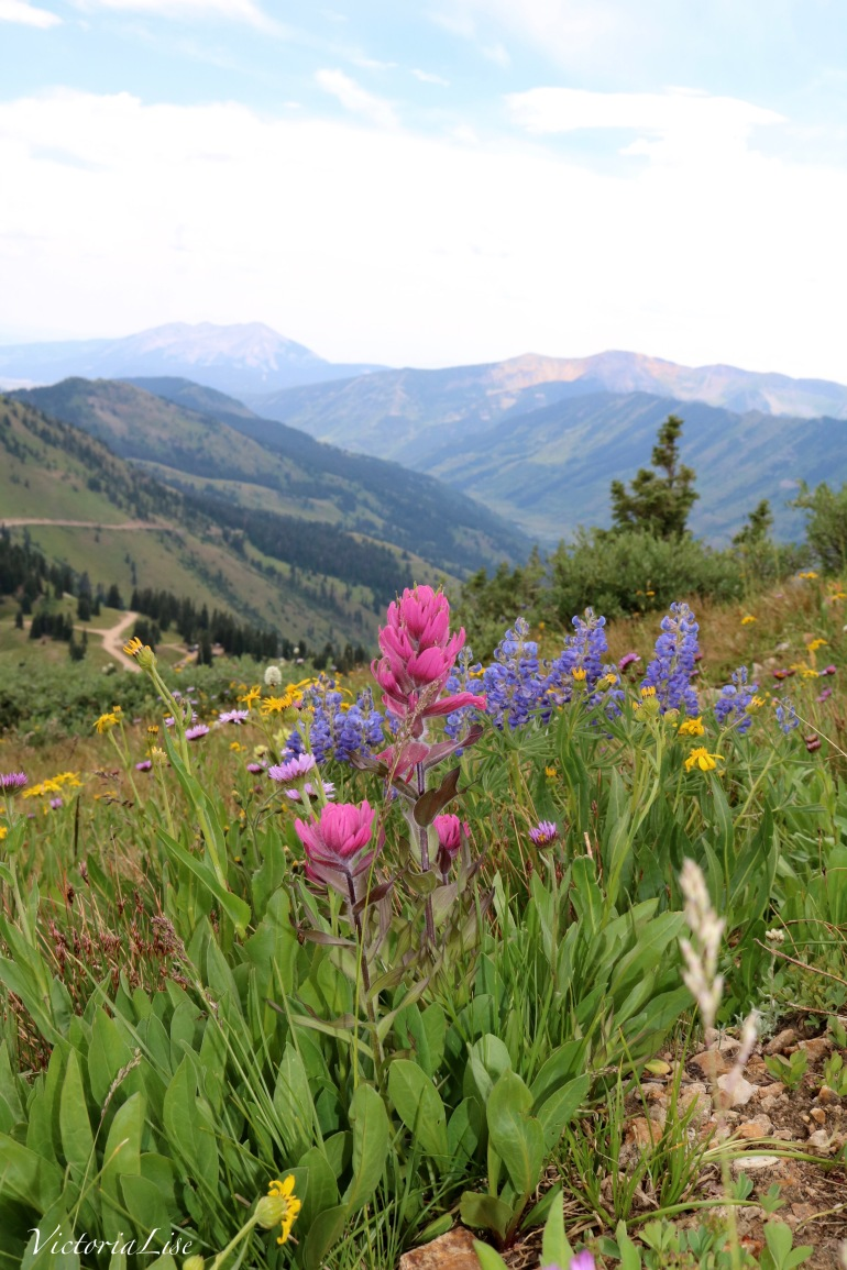 Rocky Mountain Wildflowers with A View. ©Victoria Lise Walls.