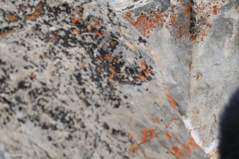 Orange spots of oxidation on boulders. ©Victoria Lise 2018.