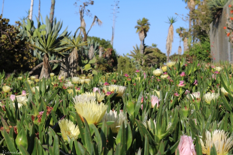 Succulent Jungle. San Diego, California. ©Victoria Lise 2018.