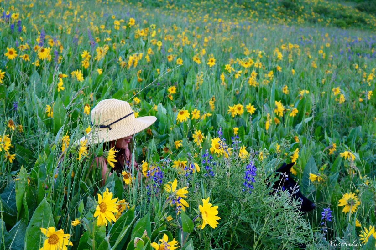 Victoria Lise and pup, Styx in a wildflower Field of Crested Butte, CO. 2016