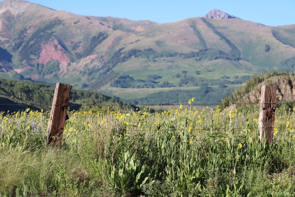 Fenced Field of Flowers. Colorado Rocky Mountains. ©Victoria Lise 2018.