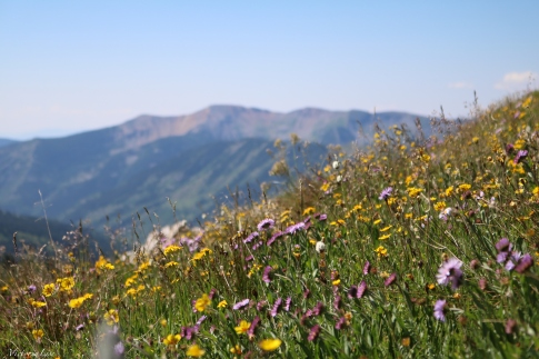 A collective of Colorado's wildflowers. ©Victoria Lise 2018.
