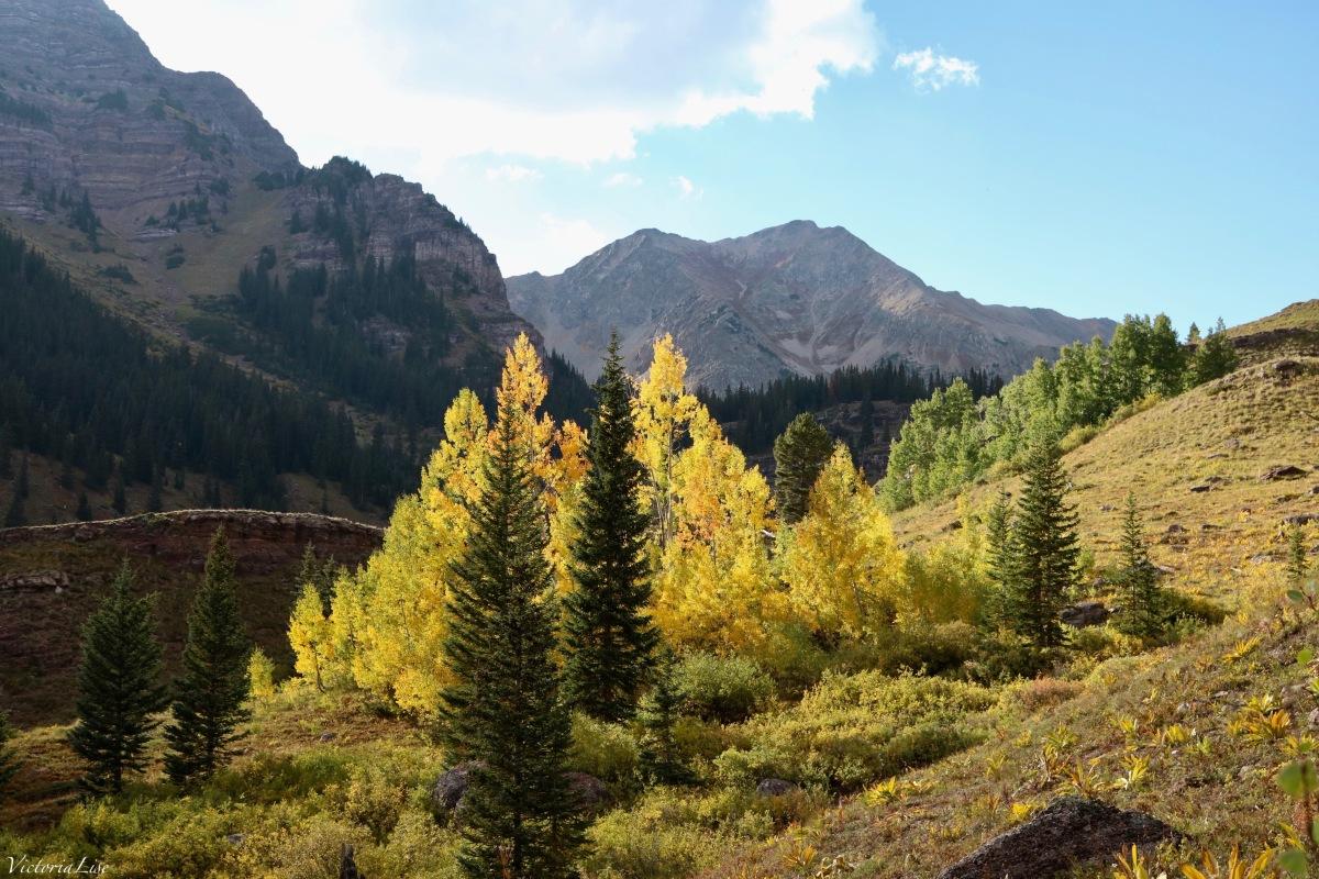 Aspen trees in peak fall color. ©Victoria Lise