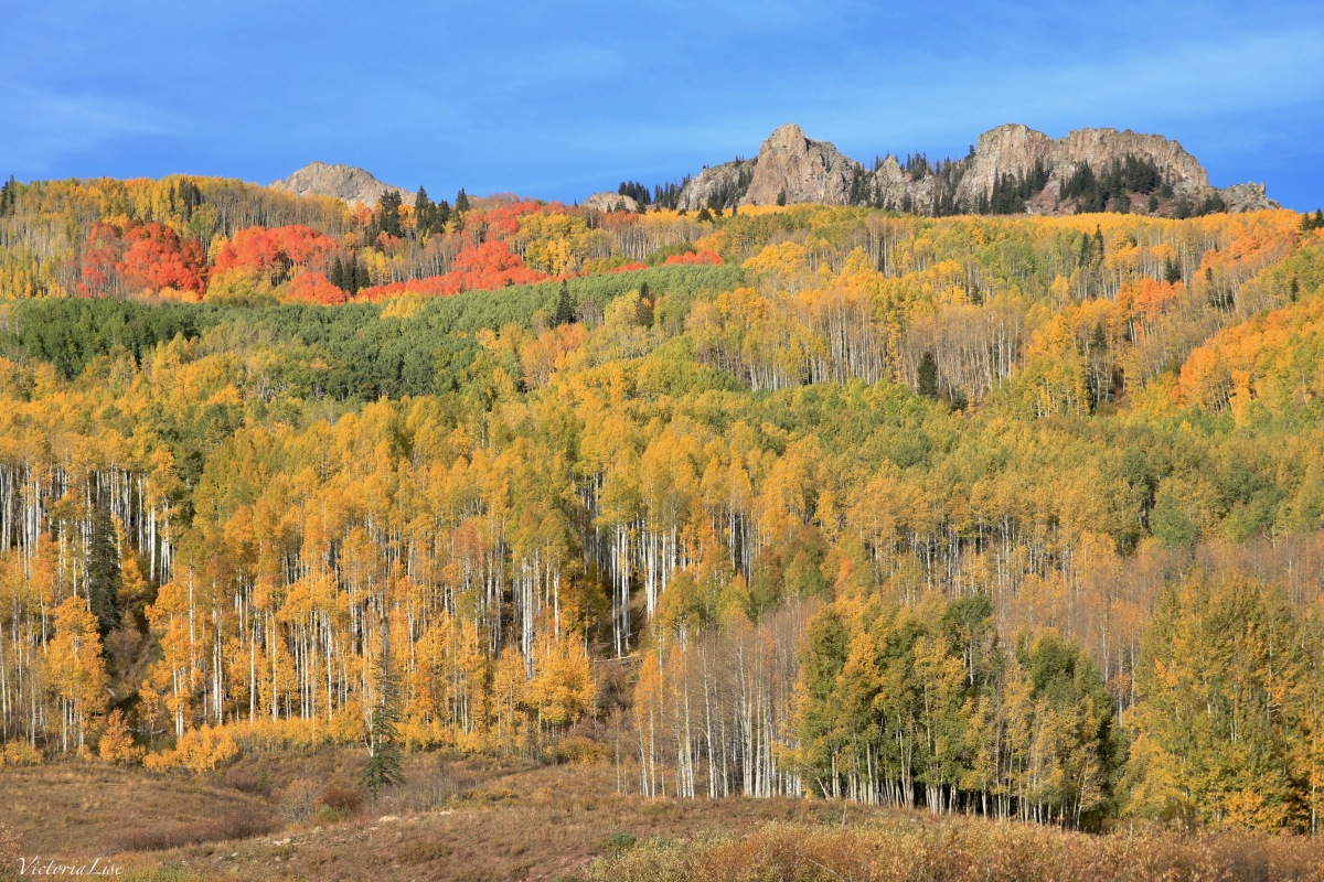 Aspens diverse color palette along Kebler Pass, Colorado. ©Victoria Lise 2018.