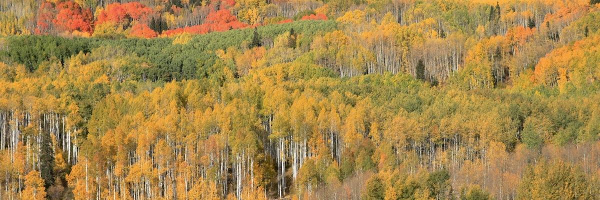 Aspens diverse color palette along Kebler Pass, Colorado. ©Victoria Lise 2018.