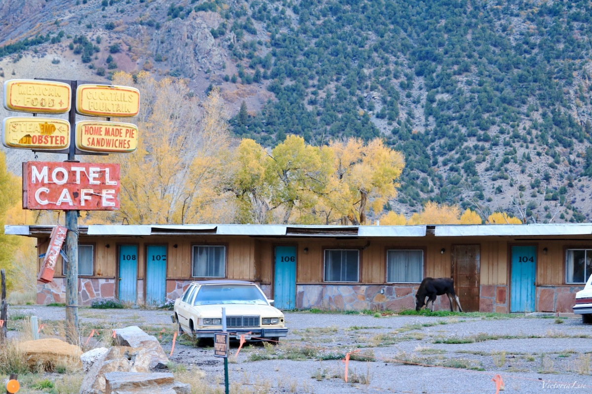 Moose grazing at abandoned Motel Cafe, Colorado. ©Victoria Lise 2018.